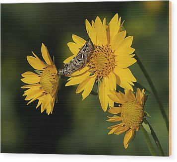 Sunny Hopper Wood Print by Ernie Echols