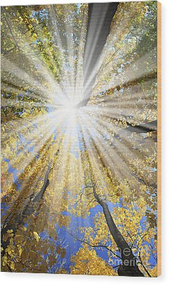 Sunrays In The Forest Wood Print by Elena Elisseeva
