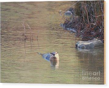 Sunrise Otter Wood Print by Mike Dawson