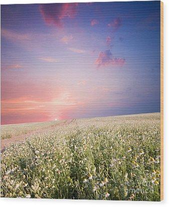Sunrise Over Flower Land Wood Print by Michal Bednarek