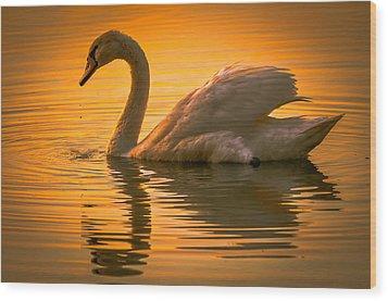 Sunset Swan Wood Print by Brian Stevens