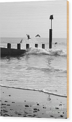 Surprised Seagulls Wood Print by Anne Gilbert