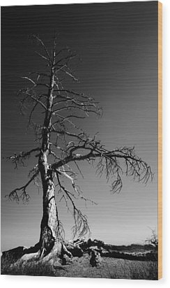 Survival Tree Wood Print by Chad Dutson