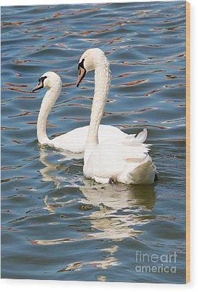 Swans And Swirls Wood Print by Carol Groenen