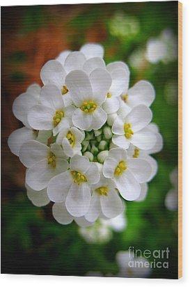 Sweet Alyssum Wood Print by Patti Whitten