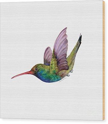 Swooping Broad Billed Hummingbird Wood Print by Amy Kirkpatrick