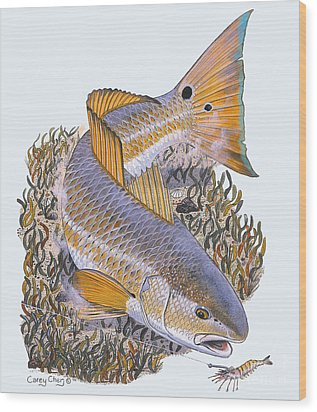 Tailing Redfish Wood Print by Carey Chen