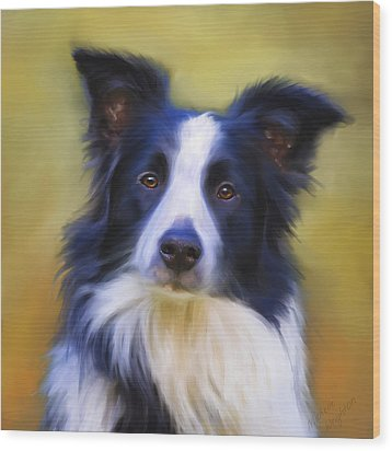 Beautiful Border Collie Portrait Wood Print by Michelle Wrighton