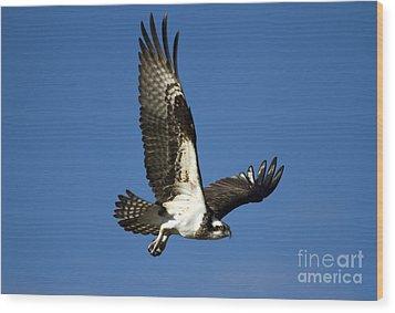 Take Flight Wood Print by Mike  Dawson