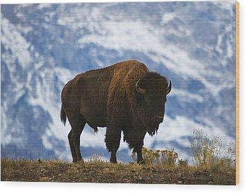 Teton Bison Wood Print by Mark Kiver