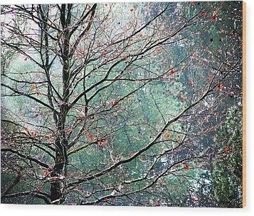 The Aura Of Trees Wood Print by Angela Davies
