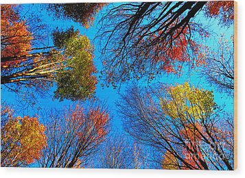 The Autumn Leaves At Potato Creek Wood Print by Tina M Wenger