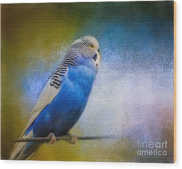 The Budgie Collection - Budgie 2 Wood Print by Jai Johnson