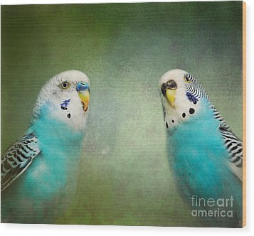 The Budgie Collection - Budgie Pair Wood Print by Jai Johnson