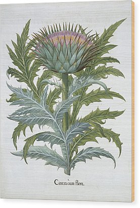 The Cardoon, From The Hortus Wood Print by German School