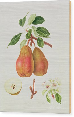 The Chaumontelle Pear Wood Print by William Hooker