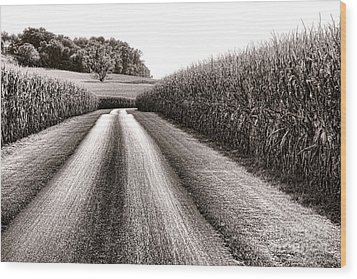 The Corn Road Wood Print by Olivier Le Queinec