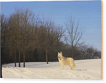 The Dog On The Hill Wood Print by Kay Novy