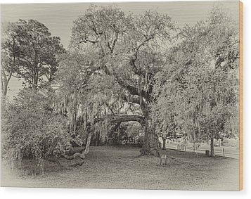The Dueling Oak - A Place For Dying Bw Wood Print by Steve Harrington