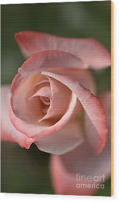 The Eye Of The Rose Wood Print by Joy Watson