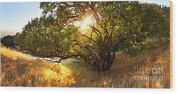 The Giving Tree Wood Print by Matt Tilghman