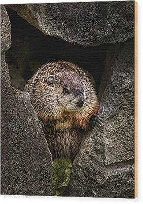 The Groundhog Wood Print by Bob Orsillo