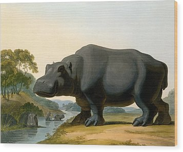 The Hippopotamus, 1804 Wood Print by Samuel Daniell