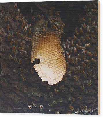 The Hive  Wood Print by Shawn Marlow