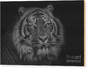 The Last Indonesian Wood Print by Ashley Vincent