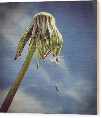 The Last Wish Wood Print by Marianna Mills