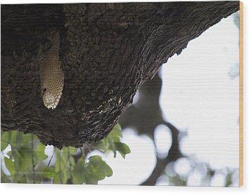 The Live Oak Wood Print by Shawn Marlow