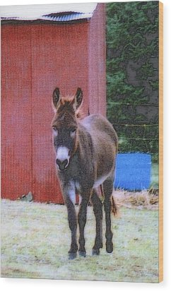 The Lonely Donkey Wood Print by Kay Novy