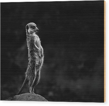 The Meerkat Wood Print by Greetje Van Son