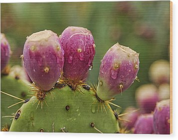 The Prickly Pear  Wood Print by Saija  Lehtonen