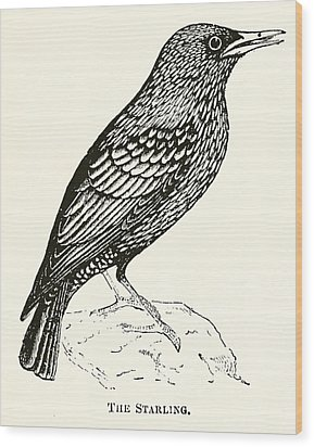 The Starling Wood Print by English School