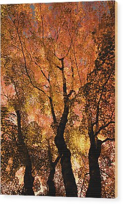The Trees Dance As The Sun Smiles Wood Print by Don Schwartz