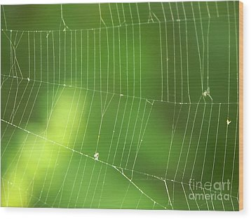 The Web Wood Print by Roman Milert