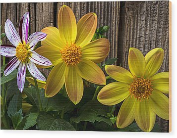 Three Dahlias Wood Print by Garry Gay