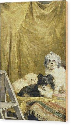 Three Dogs Wood Print by Charles van den Eycken