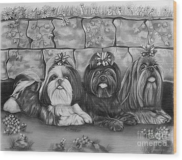 Three Little Shih Tzus Wood Print by Lena Auxier