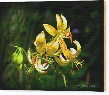 Tiger Lily Wood Print by Tammy Wallace