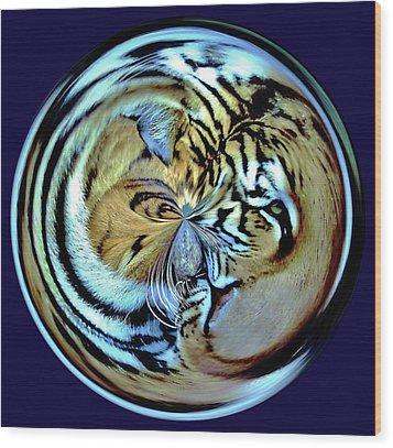 Tiger Orb Wood Print by Paulette Thomas