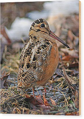 Timberdoodle The American Woodcock Wood Print by Timothy Flanigan