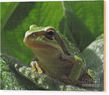 Tree Frog Wood Print by Inge Riis McDonald