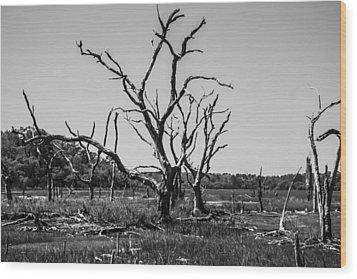 Tree Graveyard Wood Print by Steven  Taylor