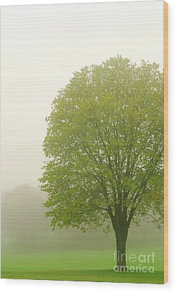 Tree In Fog Wood Print by Elena Elisseeva