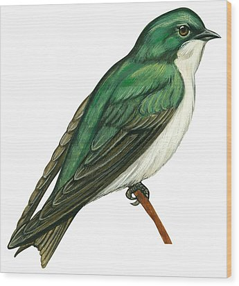 Tree Swallow  Wood Print by Anonymous