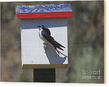 Tree Swallow Home Wood Print by Mike  Dawson