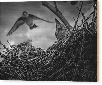 Tree Swallows In Nest Wood Print by Bob Orsillo