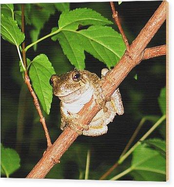 Tree Toad Night Wood Print by Tamara Stickler